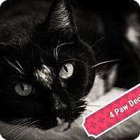 Adopt A Pet :: Roxie - Carroll, IA