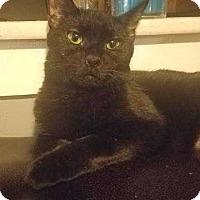 Adopt A Pet :: Bella - Putnam, CT