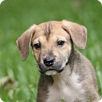 Adopt A Pet :: Fiona - Seattle, WA