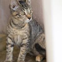 Adopt A Pet :: Jill - Lihue, HI