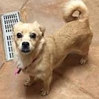 Adopt A Pet :: Dora - Philadelphia, PA