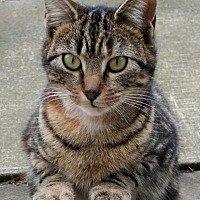 Adopt A Pet :: Skittles - Toronto, ON