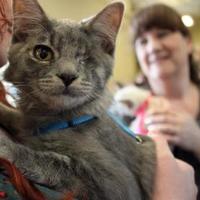 Adopt A Pet :: Jesse - Saskatoon, SK
