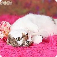 Adopt A Pet :: Mina- **Needs a Foster Home** - Eagan, MN
