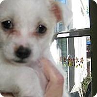 Adopt A Pet :: Baby Aubrey - Oakley, CA