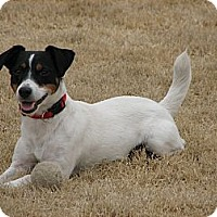 Adopt A Pet :: Tiny - Harrah, OK
