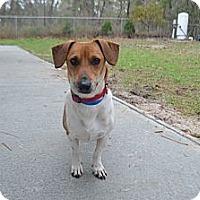 Adopt A Pet :: MAX - Brooksville, FL
