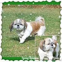 Adopt A Pet :: Bud - San Antonio, TX