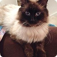 Adopt A Pet :: CharlieB - North Highlands, CA