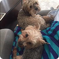 Adopt A Pet :: Sammy - Richmond, VA