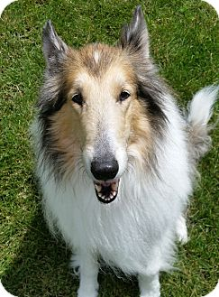 Collie Mix Dog for adoption in Owatonna, Minnesota - Ginger