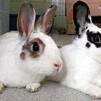 English Spot Mix for adoption in Tustin, California - Zeus