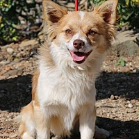 Adopt A Pet :: Bruiser - Fillmore, CA