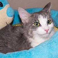 Adopt A Pet :: Lina - Elmwood Park, NJ