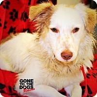 Adopt A Pet :: Henry Rollins - Redondo Beach, CA