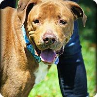 Adopt A Pet :: Bolt - Ft. Lauderdale, FL