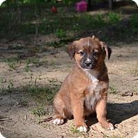 Adopt A Pet :: REINE - South Dennis, MA