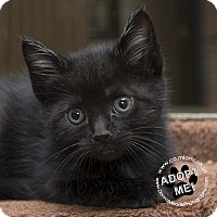 Adopt A Pet :: Joey - Troy, OH