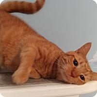 Adopt A Pet :: Eli - Concord, NC