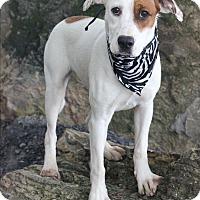 Adopt A Pet :: Brie - Dalton, GA