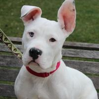 Adopt A Pet :: Butterball-SPECIAL NEEDS - Elkhorn, WI