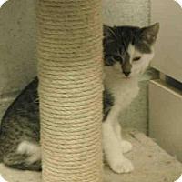 Adopt A Pet :: MABEL - Hampton Bays, NY