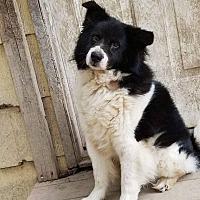 Adopt A Pet :: Harry - Virginia Beach, VA