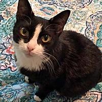 Adopt A Pet :: Bunny - Merrifield, VA