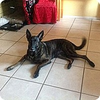 Adopt A Pet :: Abby in FL - Jamestown, CA