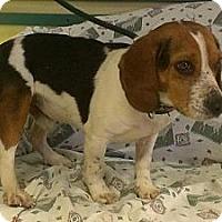 Adopt A Pet :: Kyle - Ridgely, MD
