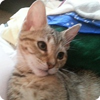 Adopt A Pet :: Tawny - Lawrenceville, GA