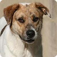 Adopt A Pet :: Leo - Lufkin, TX