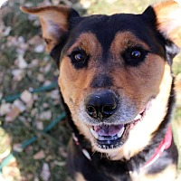 Adopt A Pet :: Lucy - Greeley, CO