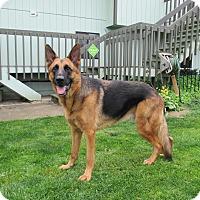 Adopt A Pet :: Jackson*ADOPTED* - Mill Creek, WA