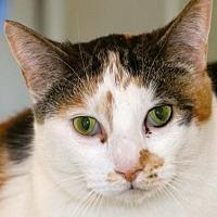 Adopt A Pet :: Sugar - Lancaster, CA