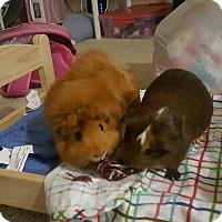 Adopt A Pet :: Cherry Blossom & Garnet - Fullerton, CA