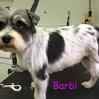 Adopt A Pet :: Jackson NJ - Barbi - New Jersey, NJ
