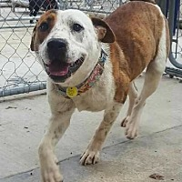 Adopt A Pet :: Beau - Hanna City, IL