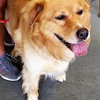 Adopt A Pet :: KOBI - Murrells Inlet, SC