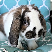 Adopt A Pet :: Chevy - Hillside, NJ