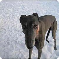Adopt A Pet :: Heather (Pat's Heather H ) - Chagrin Falls, OH