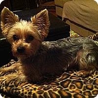 Adopt A Pet :: Murray - Charlotte, NC