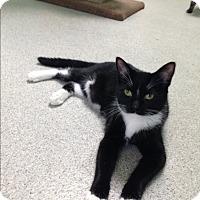 Adopt A Pet :: Mitzy - Newport Beach, CA