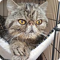 Adopt A Pet :: Boris - Davis, CA