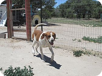 Hound (Unknown Type) Dog for adoption in Pie Town, New Mexico - Clyde