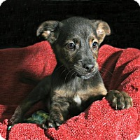 Adopt A Pet :: Grumpy - Lufkin, TX