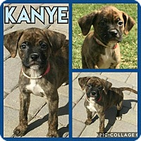 Adopt A Pet :: Kanye - Scottsdale, AZ