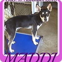 Adopt A Pet :: MADDI - Halifax, NS