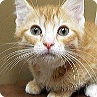 Adopt A Pet :: Benny - Oswego, IL