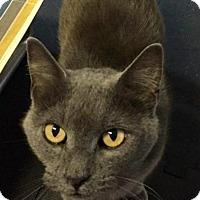 Adopt A Pet :: Sue - Mount Pleasant, SC
